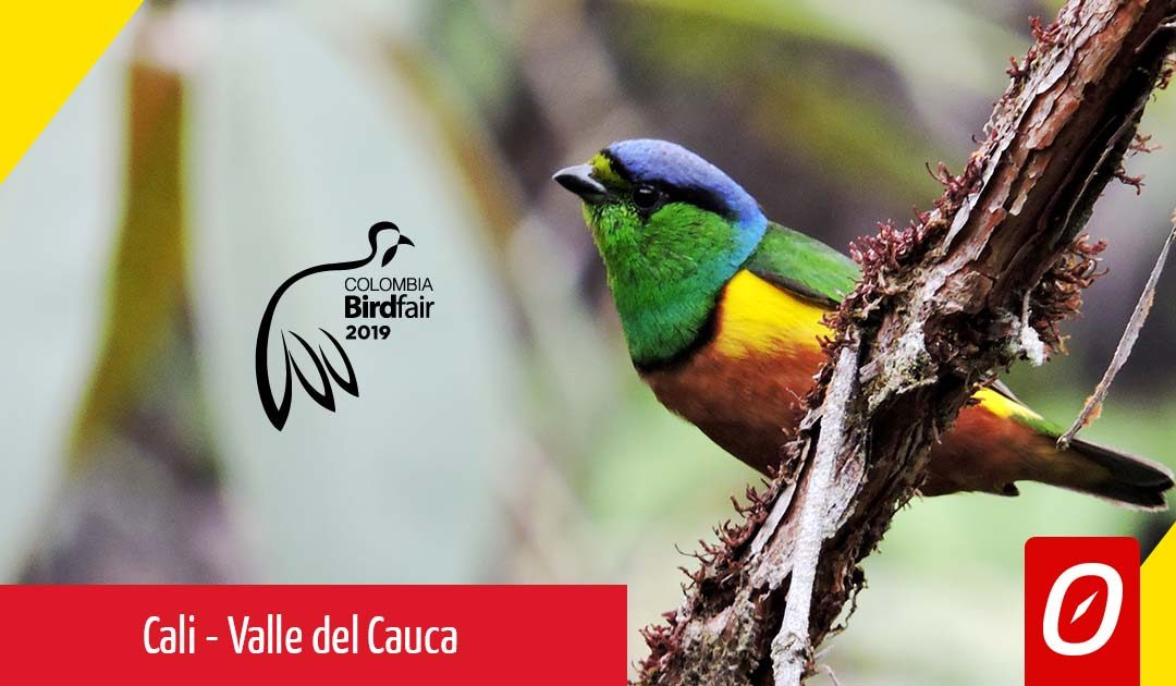 "Feria Internacional de Aves ""BirdFair"" Cali – 13 al 17 de febrero"